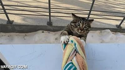 Enlace a El gato que no tenía ningún problema para volver a casa
