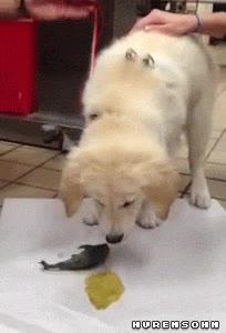 Enlace a Bueno, supongo que ahí estaba el problema del ahogo del perrito