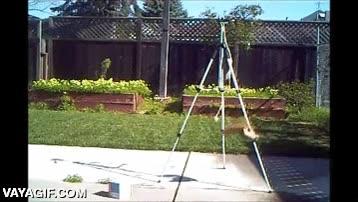 Enlace a ¿Tienes ardillas en tu patio? Cuelga comida de una cuerda en un trípode y disfruta del show