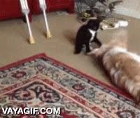 Enlace a El gato del encantador de perros