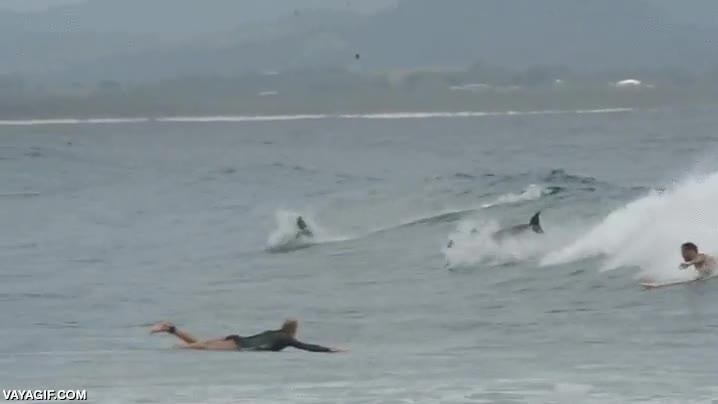 Enlace a Surfeando entre delfines, uno de mis máximos sueños