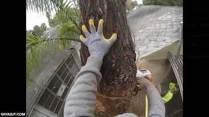 Enlace a Un hombre corta un árbol sin imaginarse que el propio tronco era un nido de abejas