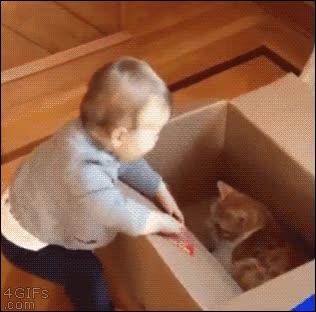 Enlace a Niños pequeños, cajas de cartón y gatos, mala combinación