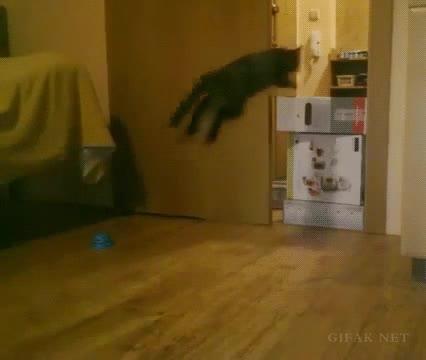 Enlace a La capacidad de salto de los gatos nunca dejará de sorprenderme