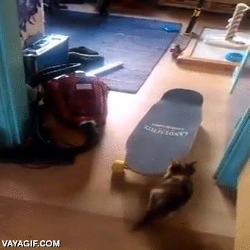 Enlace a Un gatito aprendiendo a montar en monopatín