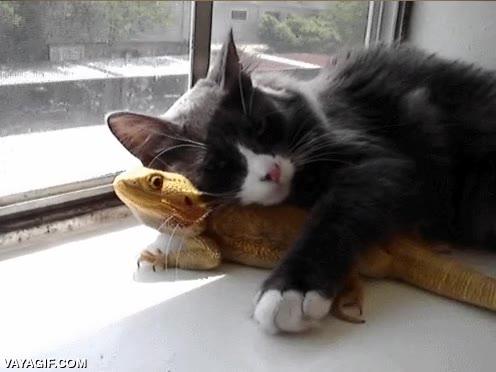 Enlace a Tranquilo, pequeño dragón, yo te mantendré caliente y luego me ayudarás a dominar el mundo