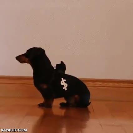 Enlace a El mejor perro policía de todos los tiempos