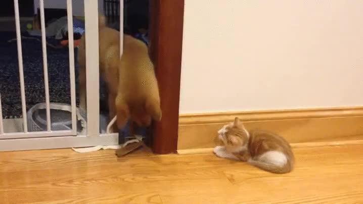 Enlace a El gatito que sabía aprovechar las ventajas de una valla