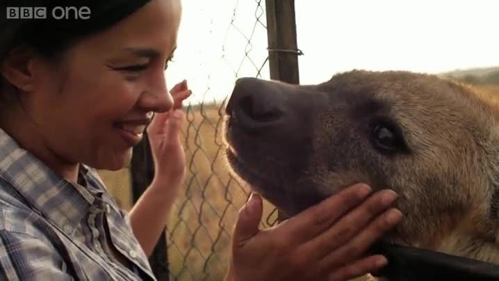Enlace a Las hienas son animales feroces, pero también tienen su corazoncito