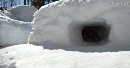 Enlace a Jugando con un dachshund en la nieve