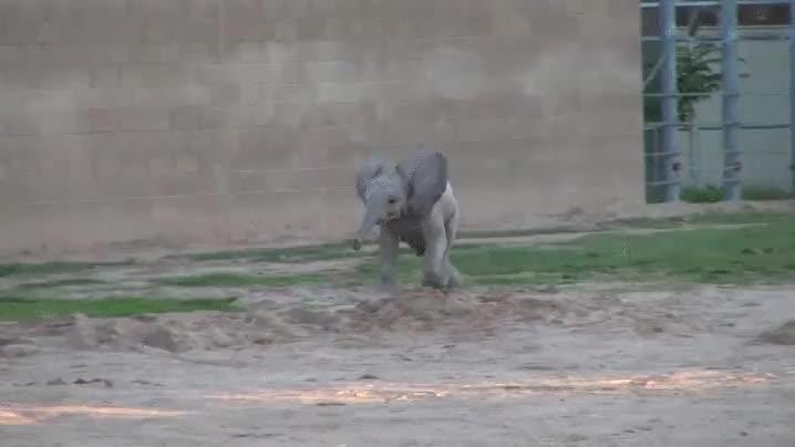 Enlace a La carga más adorable de un elefante