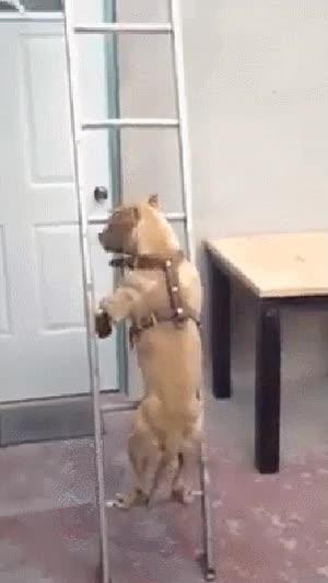 Enlace a El perro que subía escaleras