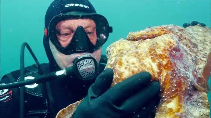 Enlace a Un tierno calamarcito que también se deja hacer mimitos