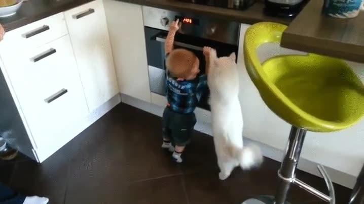 Enlace a El gato que cuidaba del pequeño de la casa