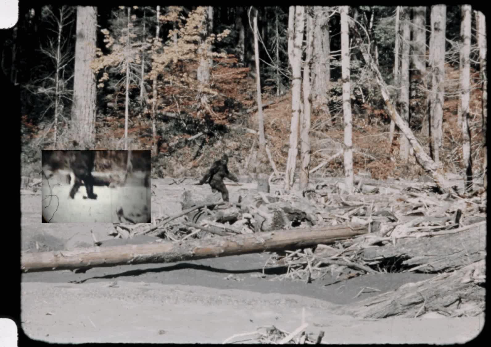 Enlace a La mítica grabación de Patterson del bigfoot, estabilizada en un gif