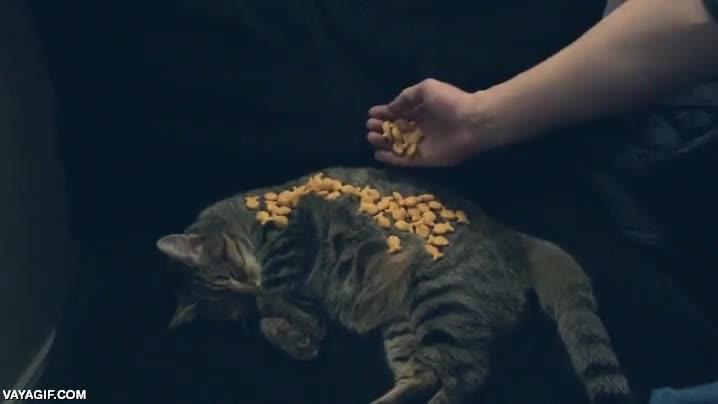 Enlace a ¿Cuántos pececitos de pan podré poner encima de mi gato sin que se despierte?