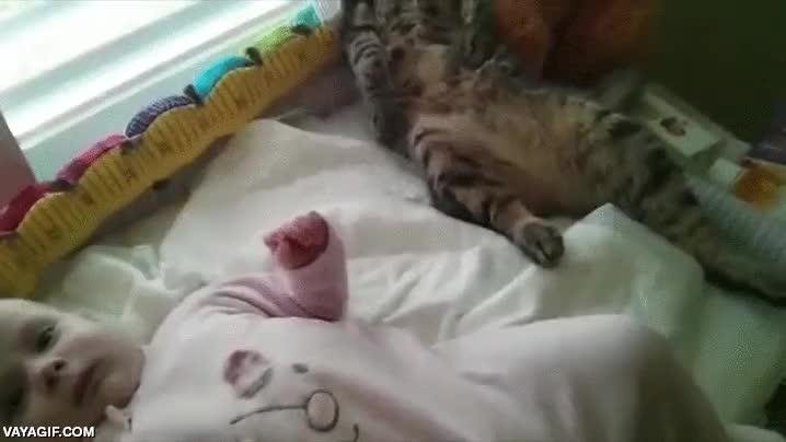 Enlace a ¡No me toques, pequeño humano, que no me toques!