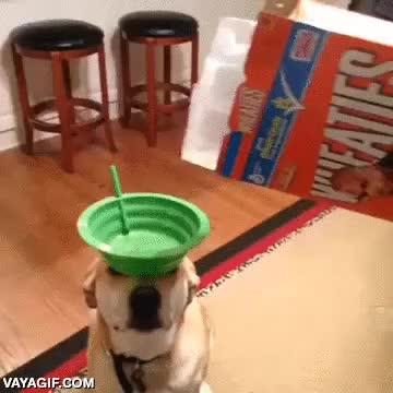 Enlace a Lo que tiene que aguantar un perro para demostrar su obediencia