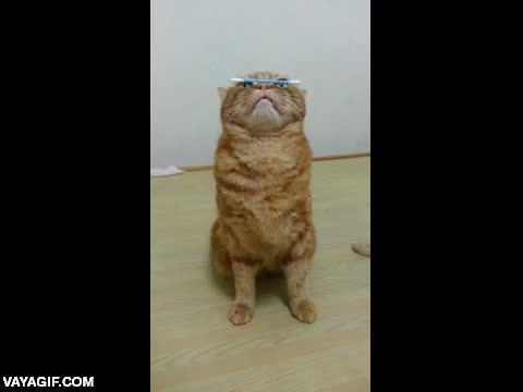 Enlace a Ejemplo de concentración felina