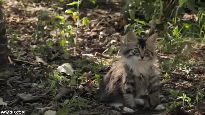 Enlace a Creo que este gatito tiene algo que no funciona bien, pero sigue siendo muy adorable