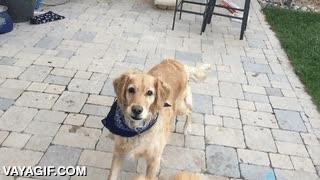 Enlace a Este perro no sería el mejor atrapador de cosas al vuelo