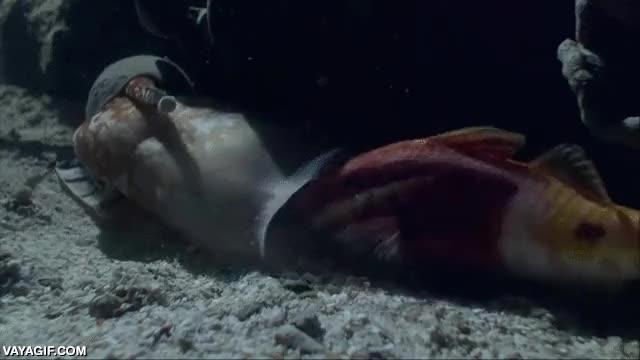Enlace a Si te dan asco las babosas, mejor no veas lo que es capaz de hacer este animal marino