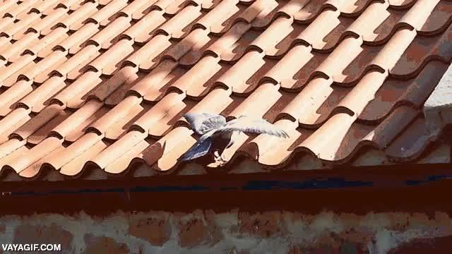 Enlace a ¿Pero qué demonios le pasa a este techo?