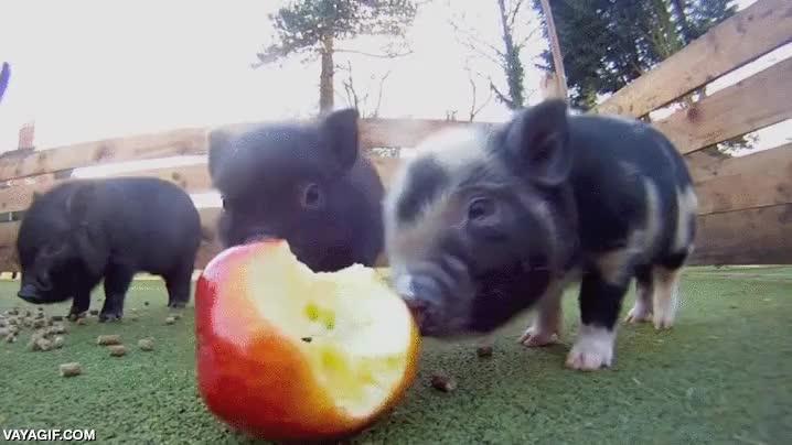 Enlace a ¡Oh sí, manzana! Espera, ¿nos estás grabando?