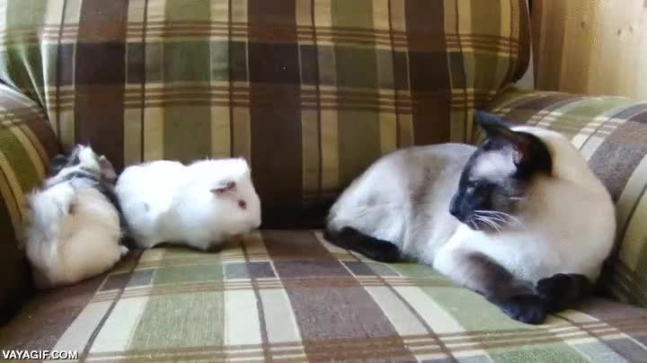 Enlace a Los gatos son todo paciencia y amor cuando se trata de lidiar con otras especies