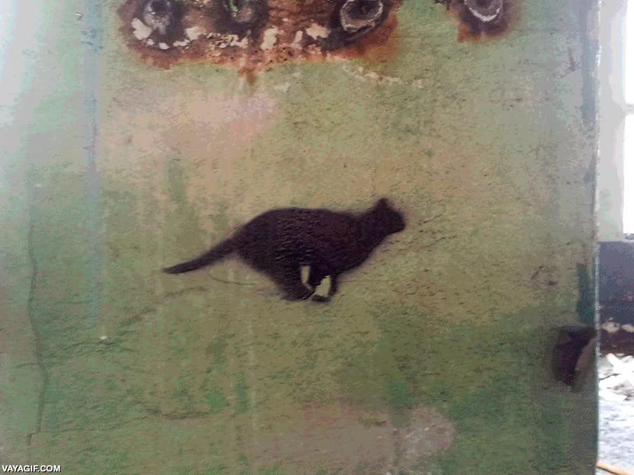 Enlace a ¡Sigue al gato negro!