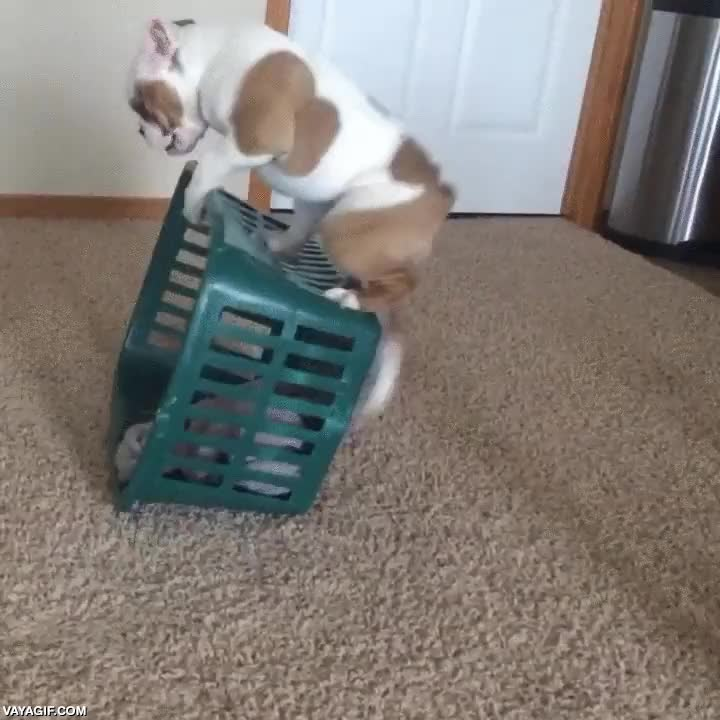 Enlace a La locura del cachorro y la cesta de la ropa
