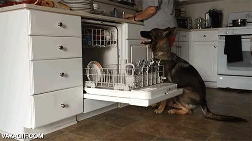 Enlace a Sin duda el perro es el mejor amigo del hombre