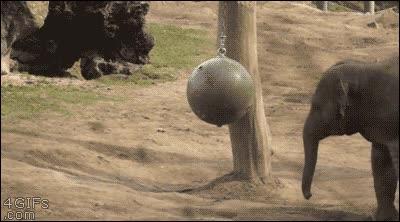 Enlace a ¿Kung-Fu Panda? Nah, ¡mejor Kung-Fu Elephant!