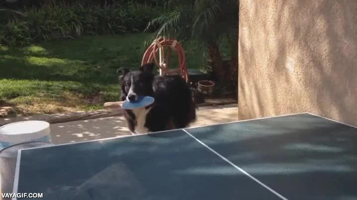 Enlace a Pues mi perro sabe sentarse y darme la patita...