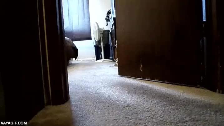 Enlace a ¿Jugar al escondite con tu perro? Claro, como si no pudieran olerte...