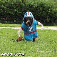 Enlace a El mejor disfraz para un perro si eres un gran fan del fútbol americano