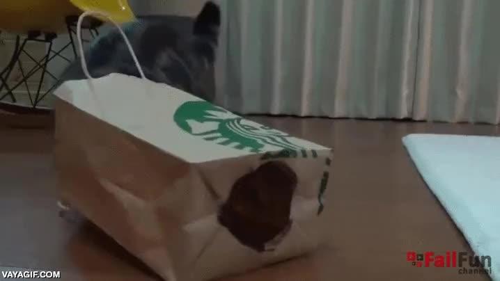 Enlace a Cosas que los gatos simplemente no pueden evitar