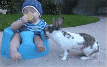 Enlace a Hoy en día no te puedes fiar ni de un adorable conejito