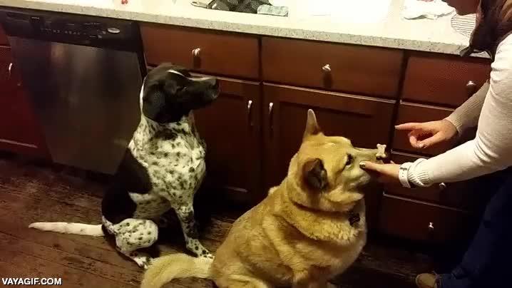 Enlace a Lo malo de los trucos en equipo entre perros es que el premio solo se lo lleva uno