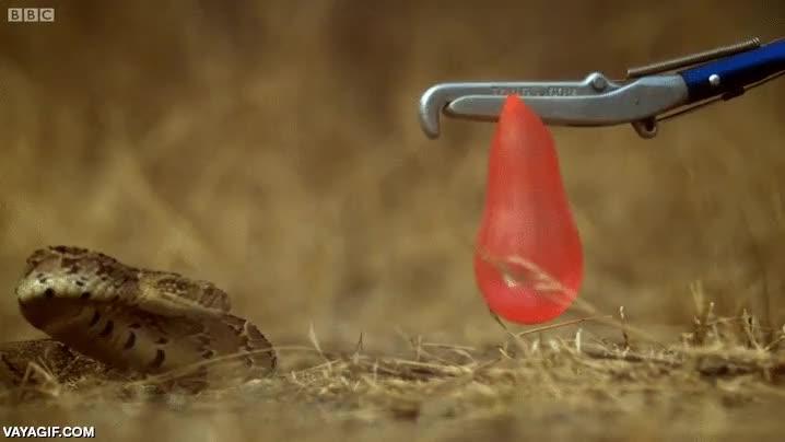 Enlace a ¿Tienes una serpiente y no sabes cómo bañarla sin que te muerda?