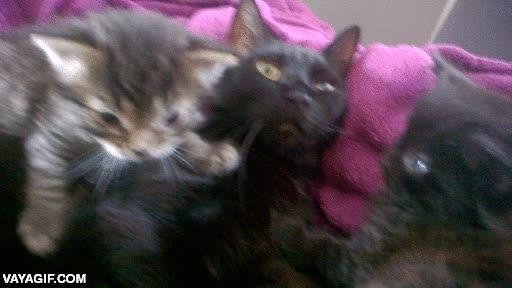 Enlace a Mi gata se acaba de dar cuenta de lo que significa ser madre
