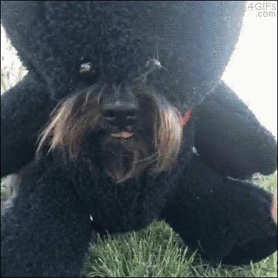 Enlace a Intentar disfrazar a tu perro de adorable osito de peluche y convertirlo en un monstruo sin ojos