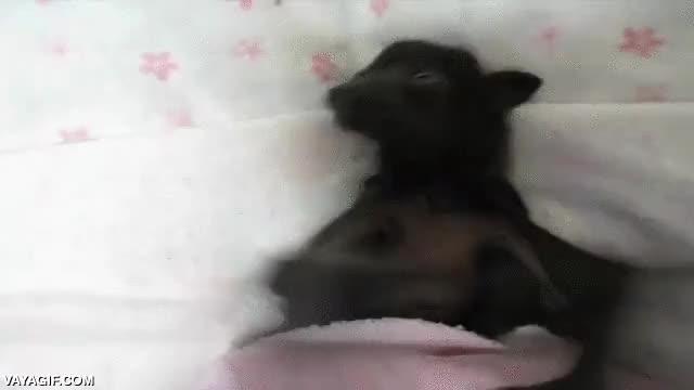 Enlace a Para los que no creen que un murciélago puede ser un animal adorable