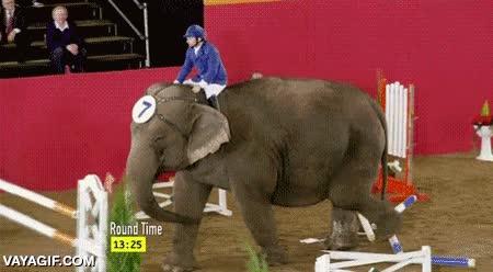 Enlace a Dicen que los elefantes no pueden saltar, pero es que tampoco lo necesitan