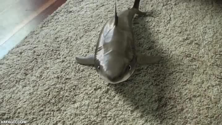 Enlace a Nunca me había planteado un tiburón como mascota hasta que he visto esto