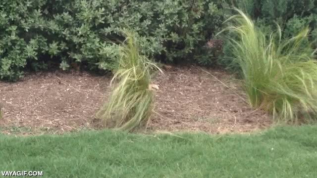 Enlace a Ninguna planta está a salvo de este temible cazador vegetariano