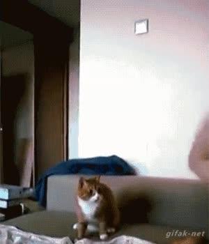 Enlace a El gato saltarín
