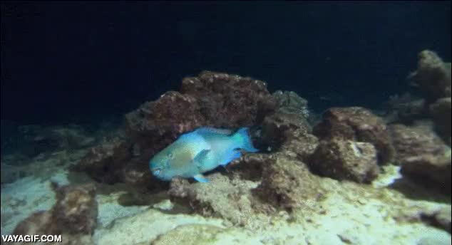 Enlace a El pez más ninja del fondo marino