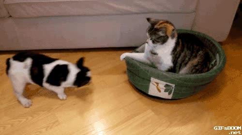 Enlace a Los gatos no solo son trolls por naturaleza, sino también muy tercos