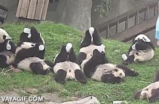 Enlace a La hora de comer en Pandaland